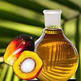 african oil palm tree