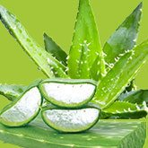 aloe vera for psoriasis treatment
