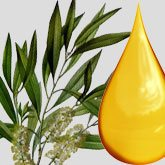 does tea tree oil help psoriasis