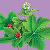 goldenseal uses