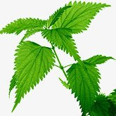 nettle sting treatment